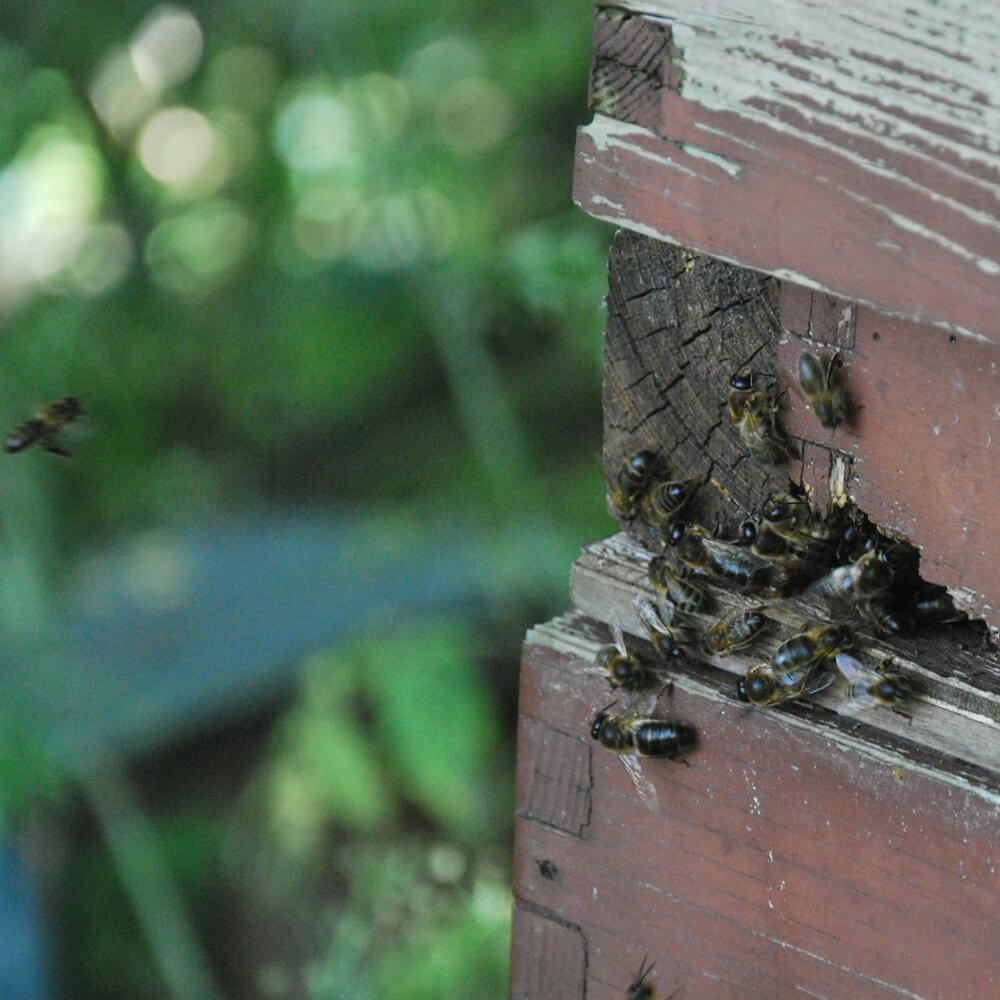 Geluid van bijen